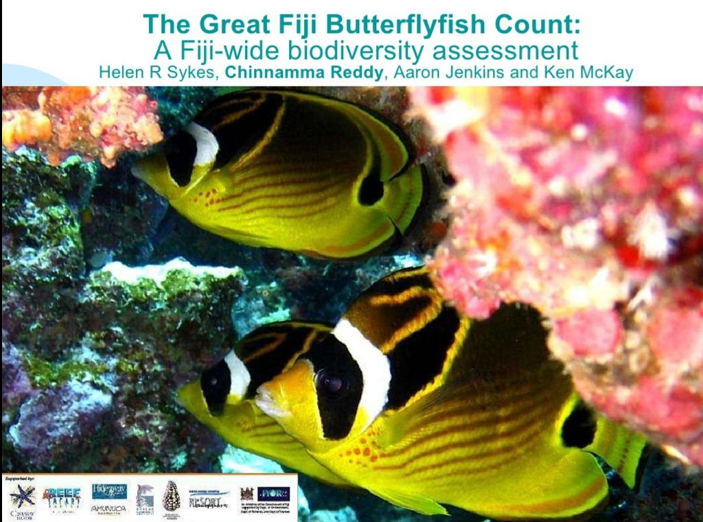 butterfly-fish-2008